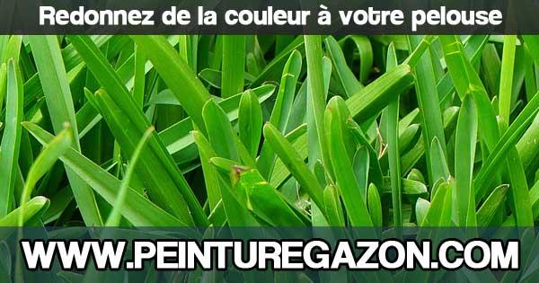 Peinture pour gazon comment peindre sa pelouse - Comment refaire sa pelouse ...
